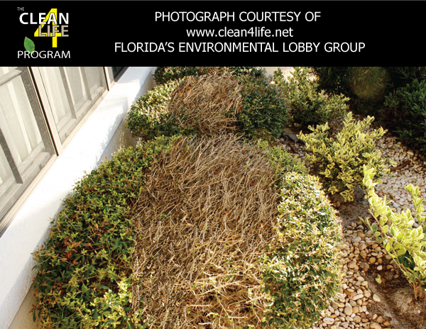 ... At The Chemical Composition Of Chlorine You Will Find That There Are  Many Negative Health And Environmental Consequences Of Using It For Roof  Cleaning.